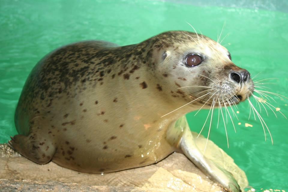 The Maritime Aquarium At Norwalk Booked Parties